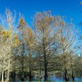 在秋天的树 免版税库存照片