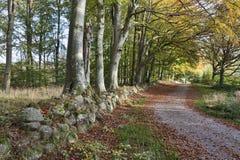 在秋天的森林公路 免版税库存图片