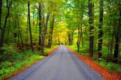 在秋天的森林公路 免版税库存照片