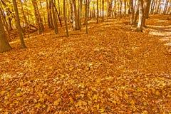 在秋天的森林地板 免版税库存照片