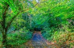 在秋天的森林足迹与金黄叶子 免版税库存照片