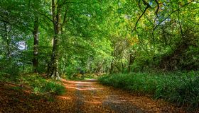 在秋天的森林足迹与金黄叶子 库存照片