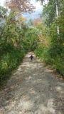 在秋天的森林道路 免版税库存照片