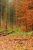 在秋天的森林里 免版税图库摄影