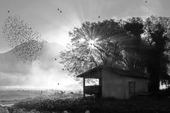 在秋天的椋鸟科迁移在黑白 免版税图库摄影