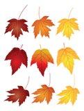 在秋天的槭树叶子上色传染媒介例证 免版税库存图片