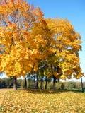 在秋天的槭树胡同 免版税库存图片