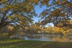 在秋天的橡木由池塘 库存照片