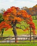 在秋天的橡树 库存照片