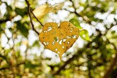在秋天的残破的黄色叶子 库存照片