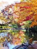 在秋天的氧化锂公园池塘反射 免版税库存照片