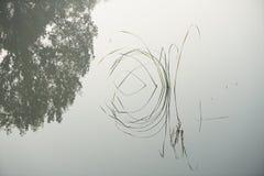 在秋天的水草 免版税库存图片