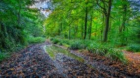 在秋天的泥泞的森林轨道 免版税图库摄影