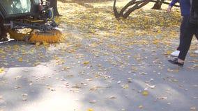在秋天的清洗的叶子 涂柏油机器清洁 股票视频