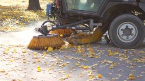 在秋天的清洗的叶子 涂柏油机器清洁 影视素材