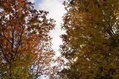 在秋天的田纳西小山打开与生动的颜色 库存照片