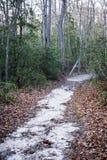 在秋天的神奇泥泞的足迹 图库摄影