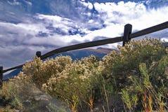 在秋天的科罗拉多野花 免版税库存图片