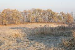 在秋天的第一早晨霜 免版税图库摄影