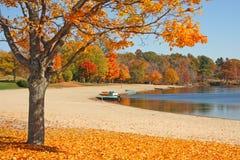 在秋天的糖槭树在湖边缘 库存图片