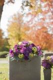 在秋天的紫色墓碑花 库存图片