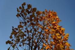 在秋天的红色叶子 免版税库存照片