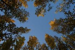 在秋天的红色叶子 图库摄影