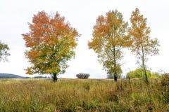 在秋天的红色和黄色白杨木 免版税库存照片