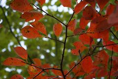在秋天的绿色和红色叶子 库存图片