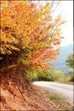 在秋天的美丽的路 免版税库存照片