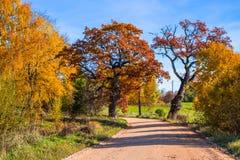 在秋天的肮脏的路 免版税库存图片