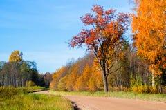 在秋天的肮脏的路 免版税库存照片