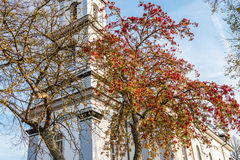 在秋天的花揪 图库摄影