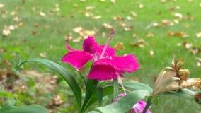 在秋天的花 库存图片