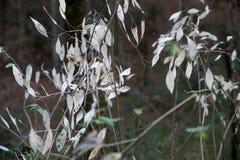 在秋天的草围拢的蒲公英 免版税库存照片
