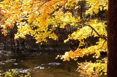 在秋天的被日光照射了橙树构筑一条小小河。 库存图片