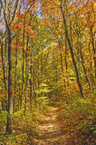 在秋天的被遮蔽的足迹 库存图片