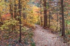 在秋天的西方叉子线索 库存照片