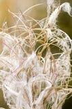 在秋天的野草 库存图片