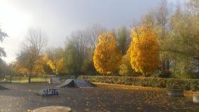 在秋天的金黄树 免版税库存图片
