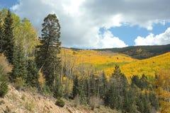 在秋天的金黄白杨木, Santa Fe国家森林 免版税库存照片
