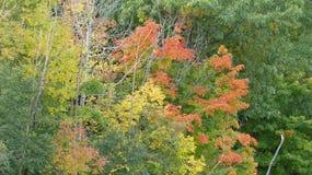 在秋天的颜色 图库摄影