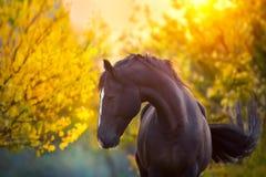 在秋天的马 库存图片