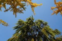 在秋天的黄色叶子 免版税库存照片