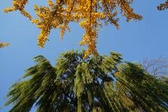 在秋天的黄色叶子 图库摄影
