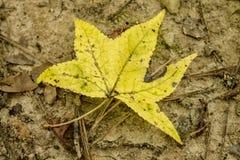 在秋天的黄色秋天叶子 库存照片