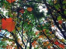 在秋天的结构树 库存图片