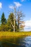 在秋天的死的树 库存照片