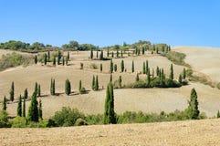 在秋天的Cypress曲线 图库摄影