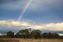 在秋天秋天早晨风景期间的美丽的彩虹在木头 图库摄影